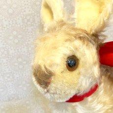 画像6: シュタイフ Pummy Rabbit (6)