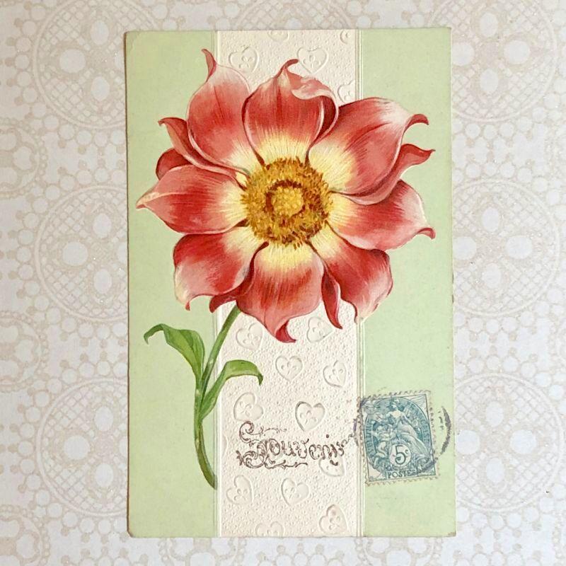 画像1: 大輪のダリアの花柄 ポストカード (1)